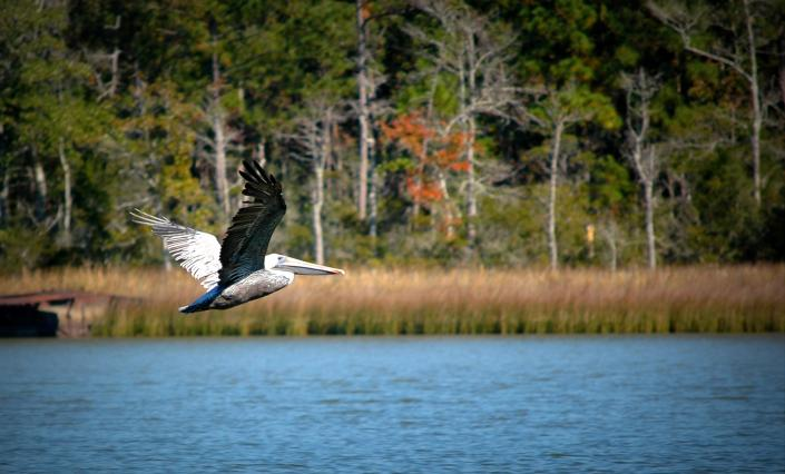 AL State Waters Extended