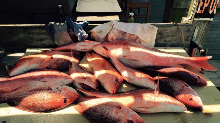2019 Longest Snapper Season In Years